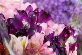 Рейтинг июня: самые популярные срезы по версии флористов