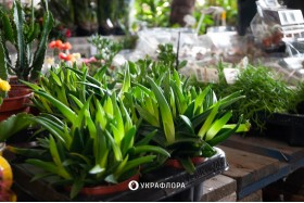 7 ідей для озеленення маленької квартири