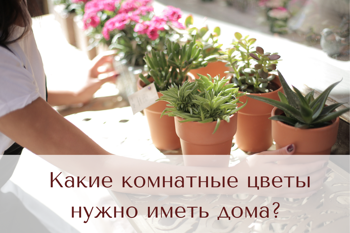 Які кімнатні квіти потрібно мати вдома?