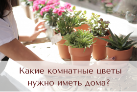 Какие комнатные цветы нужно иметь дома?
