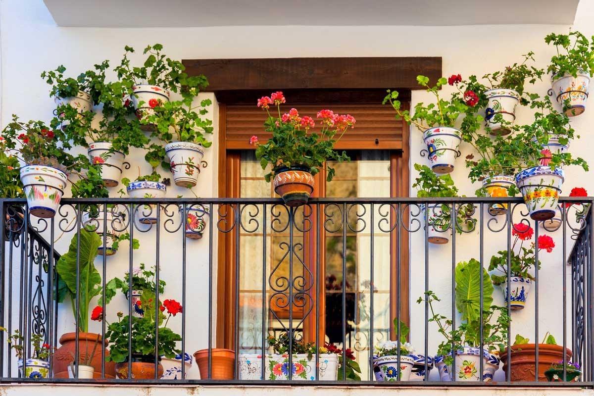 Цветы на балконе зимой. Какие забирать в комнату? Какие должны зимовать там?