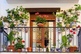 Квіти на балконі взимку. Які забирати в кімнату? Які можуть зимувати там?