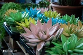 Найкращі рослини для дому з дітьми