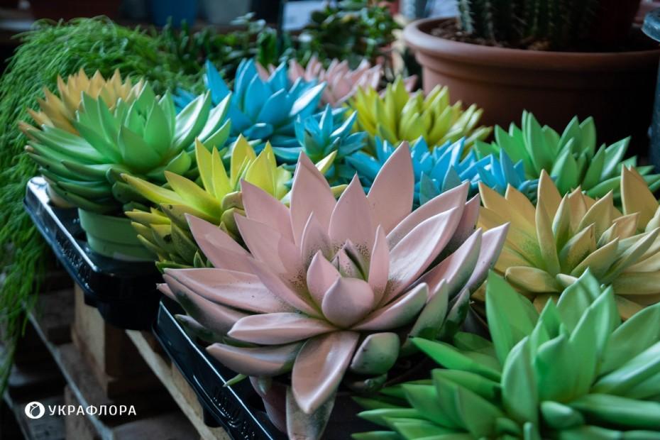 Лучшие растения для дома с детьми