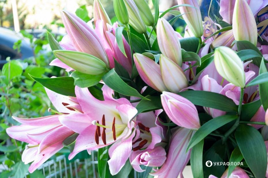 Луковичные растения: фото и названия, посадка и уход