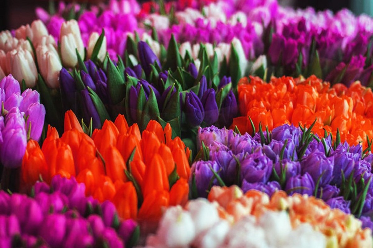 Придбати квіти гуртом. Що важливо врахувати при величезних закупівлях для свого бізнесу?