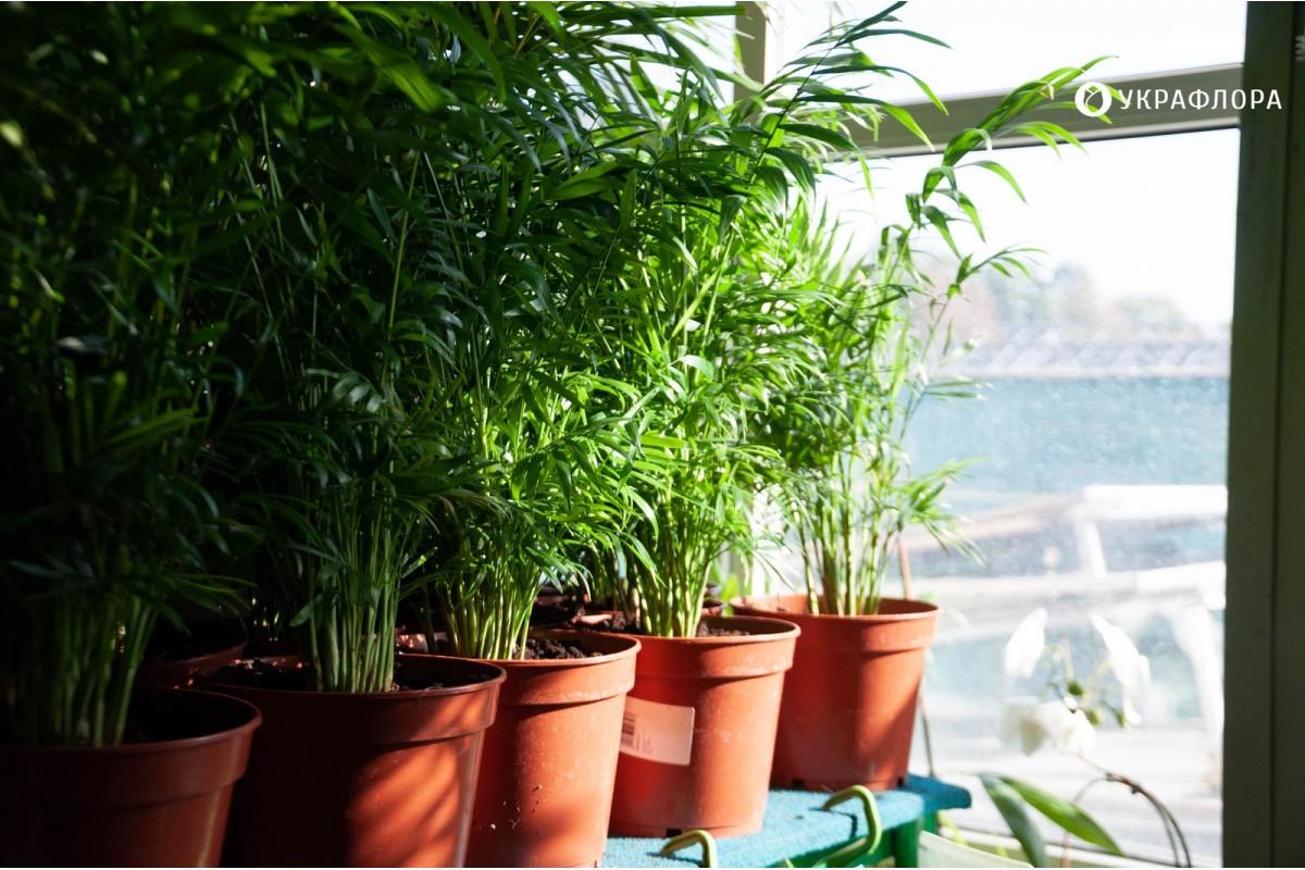 Джунглі на балконі: як облаштувати сад вдома