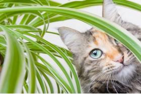 Як правильно вибрати рослини для дому, якщо у вас є домашні тварини?