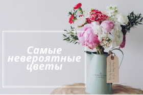 12 неймовірних фактів про квіти