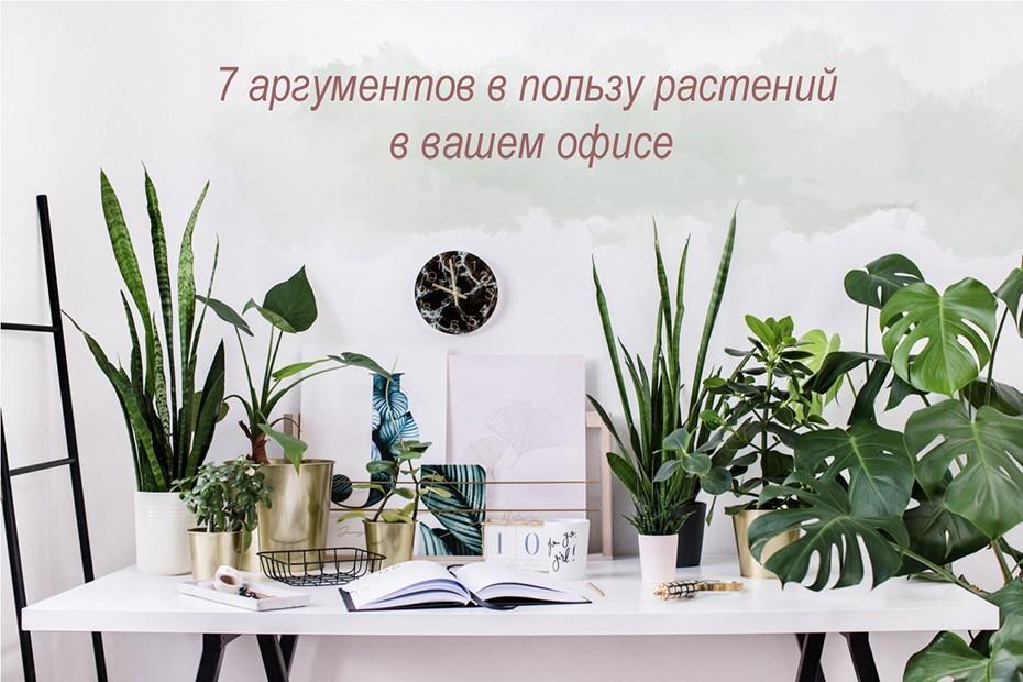 7 аргументов в пользу растений в вашем офисе