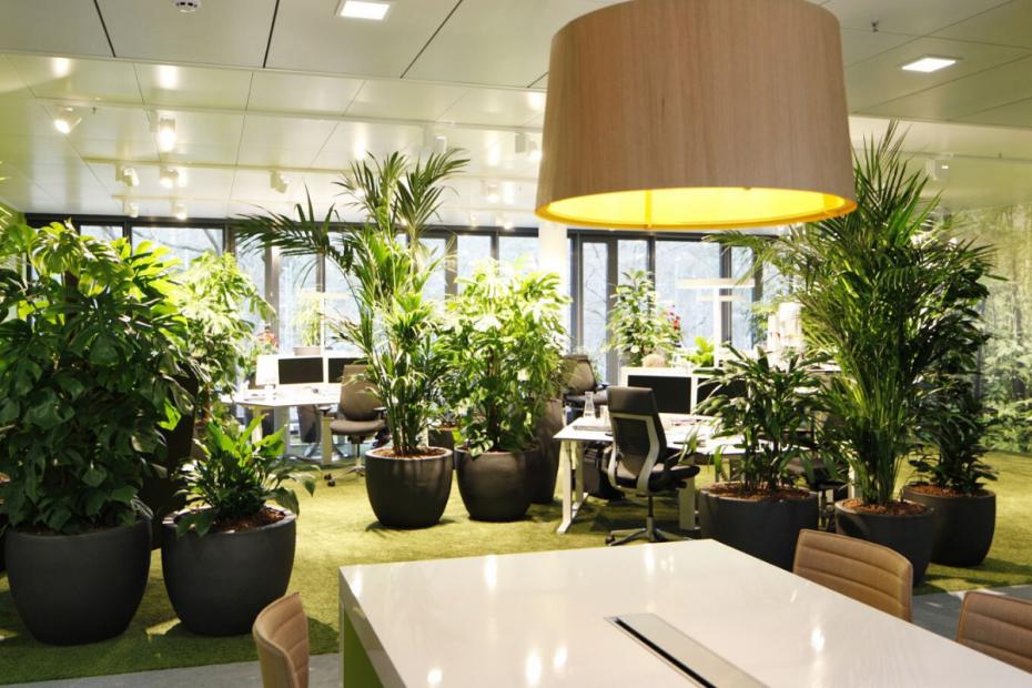 Озеленение офиса. Как это должно происходить?