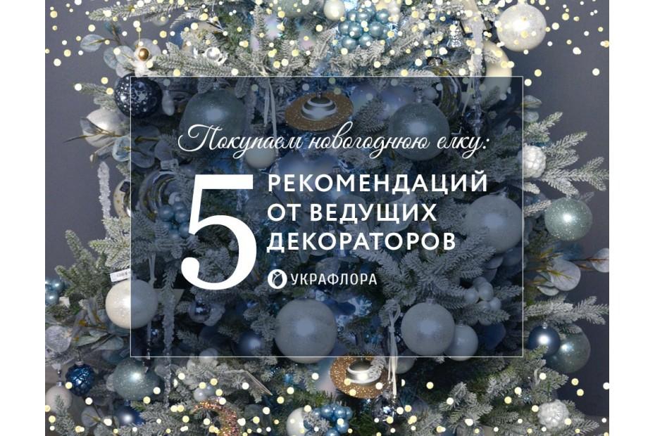 Покупаем новогоднюю елку: 5 рекомендаций от декораторов Украфлоры