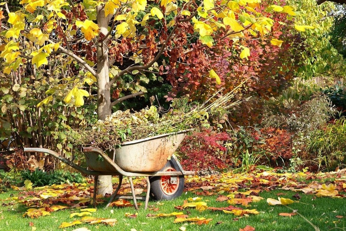 Готуємо сад до морозів. Поради експертів
