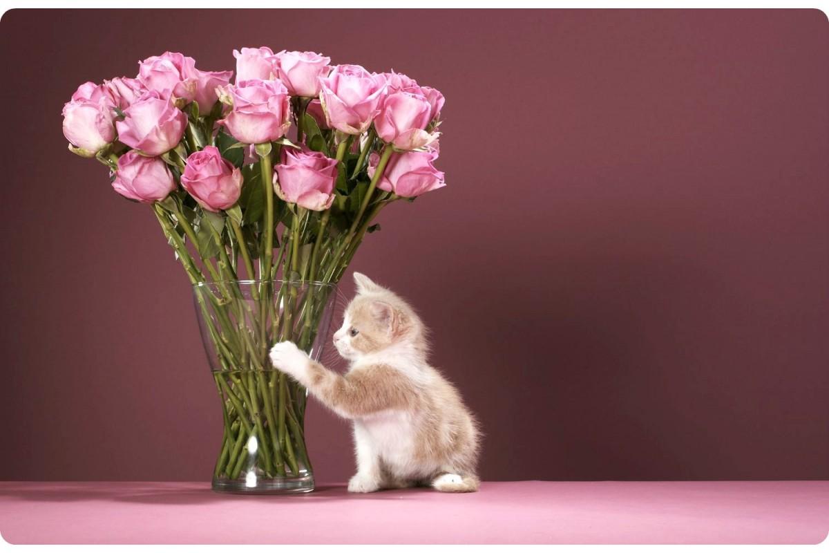 Правила догляду за зрізаними квітами та букетами.