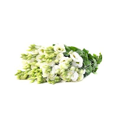 Эустома Rosita White,  422745 - купить  в магазине Украфлора по лучшей цене, всего 56 грн