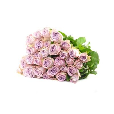 Роза Memory Lane,  924860 - купить  в магазине Украфлора по лучшей цене, всего 33 грн