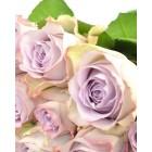 Роза,  лучшие покупке - в интернет магазине Украфлора https://ukraflora.com.ua/memory-lane-fifty