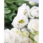 Эустома,  лучшие покупке - в интернет магазине Украфлора https://ukraflora.com.ua/eustoma-rosita-white-15408