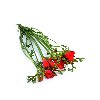 "Фрезия ""Red Passion"""