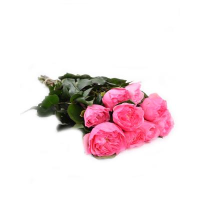 "Роза ""Mariatheresia"" GR"