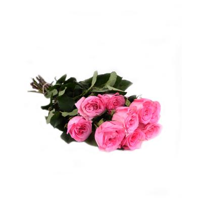 """Роза """"Ashley"""" GR"""