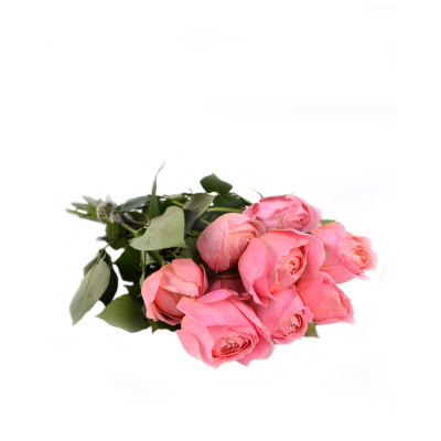 "Роза ""Romantic Antike"" GR"
