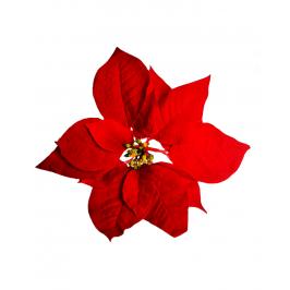 """Цветок """"Пуансетия"""" красный"""
