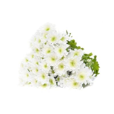 Хризантема кустовая Radost,  933845 - купить  в магазине Украфлора по лучшей цене, всего 55 грн
