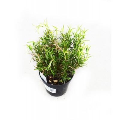 Пряные травы микс