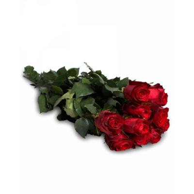 """Роза """"Red Calypso"""""""