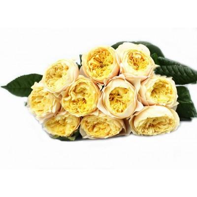 "Роза ""Vuvuzela Yellow"""