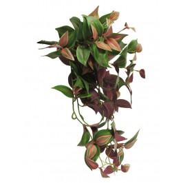 Традесканция, 50 см, зелено-красного цвета