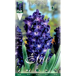 Гиацинт Blue MagicFlora Elite 3 шт.