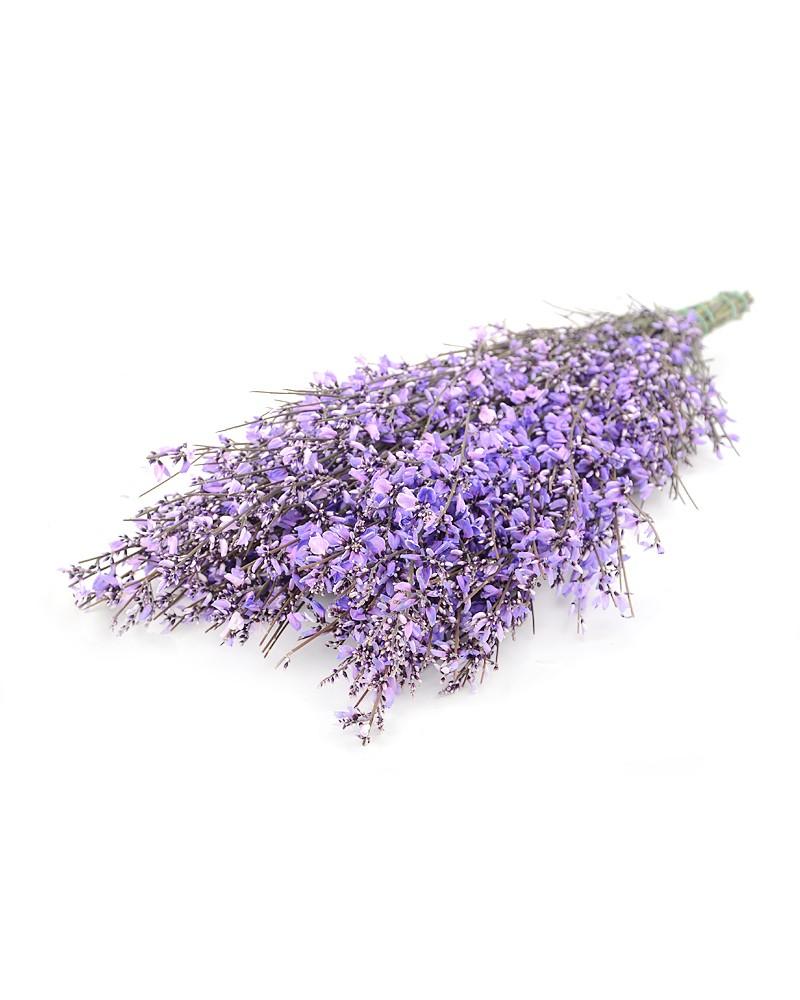 Дженестра фиолетовая