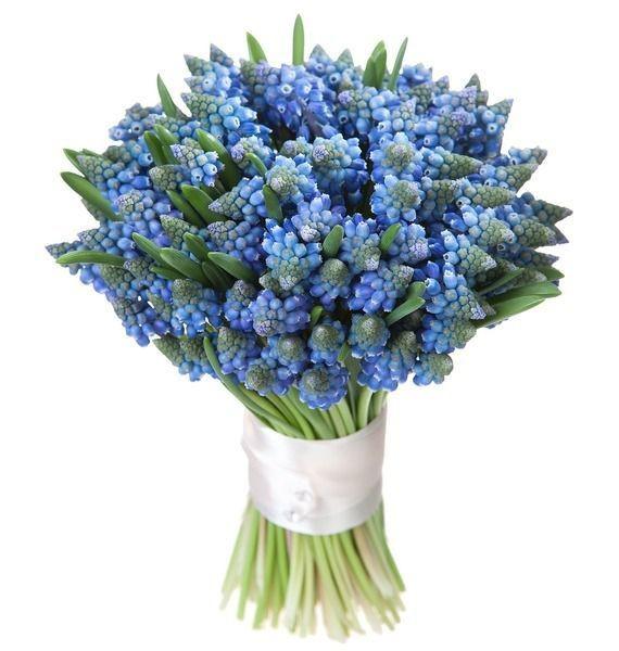Букет из цветов Мускари