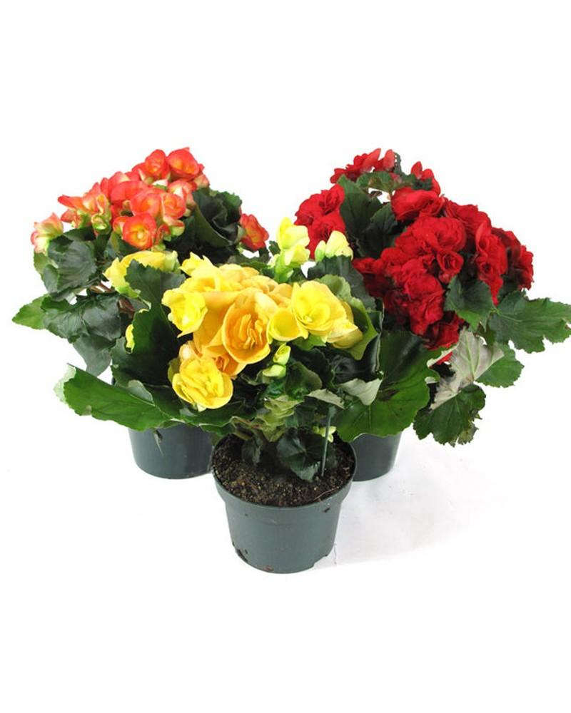 Цветов, цветов с доставкой краснодар через интернет магазин комнатных