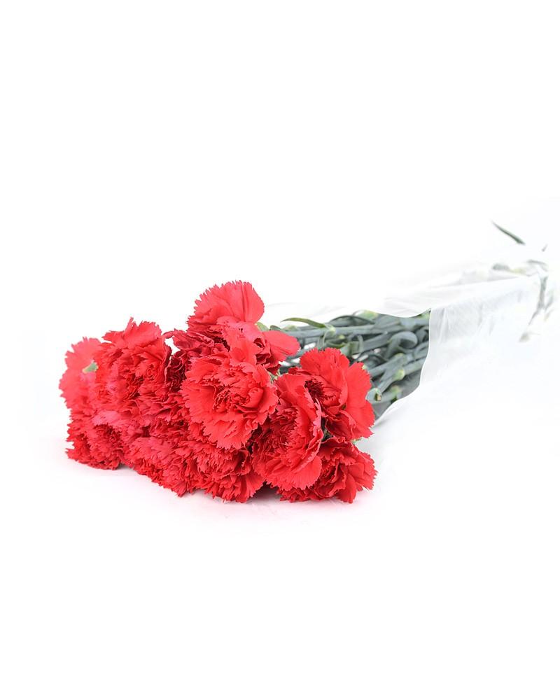 Купить гвоздики оптом украина, цветов спб хризантемы