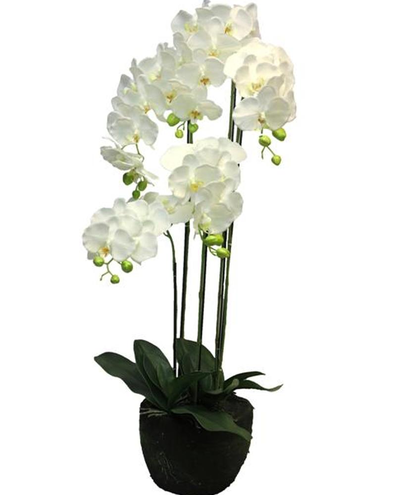 Цветок орхидеи в горшке, цветы купить в умани