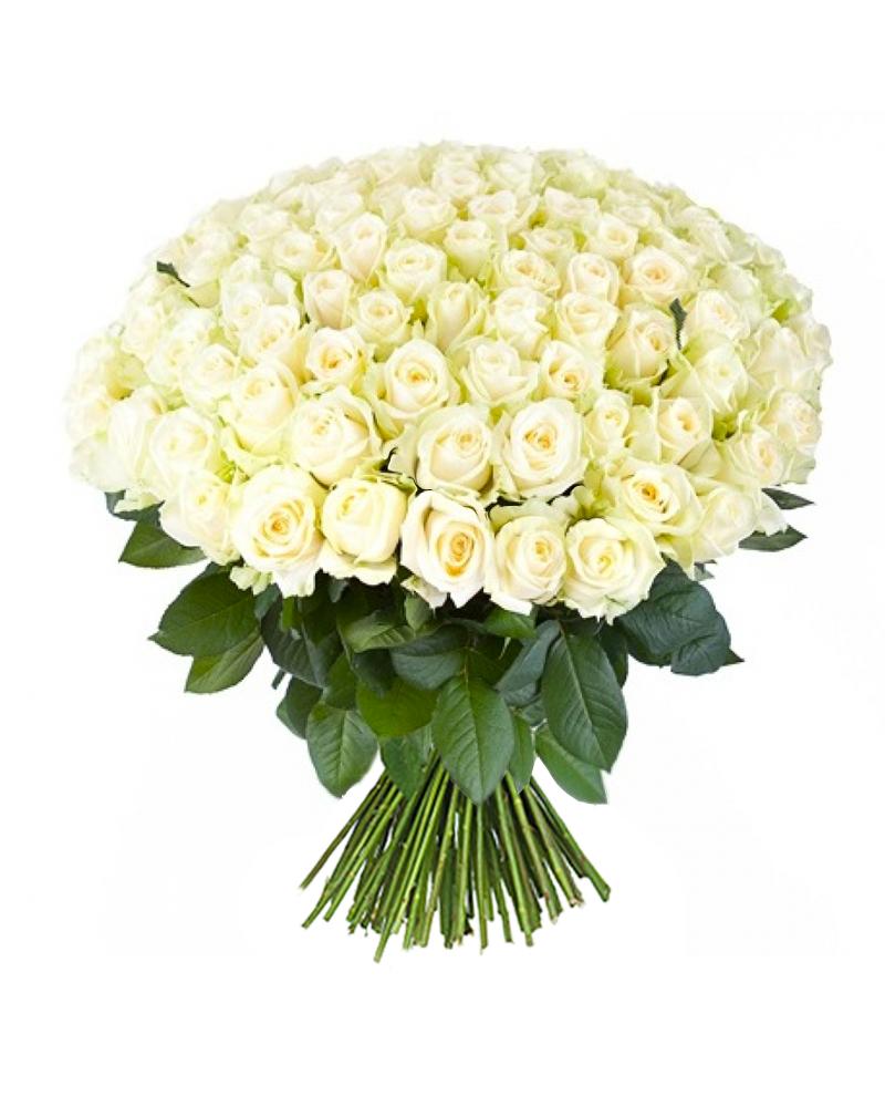 Картинки прощением, открытки с букетом из белых роз