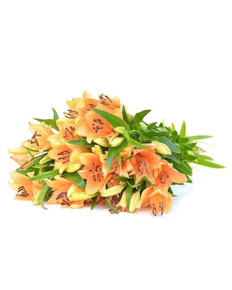 Азиатская лилия